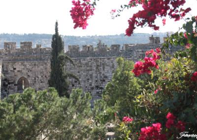 freunde-israels-e-4102