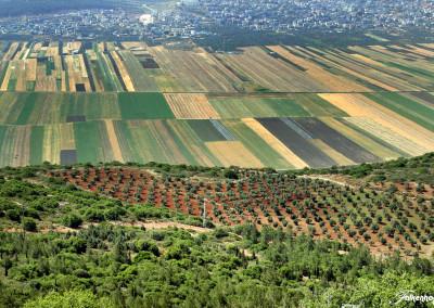 freunde-israels-galilaea-e-0656