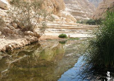 freunde-israels-wueste-e-0314