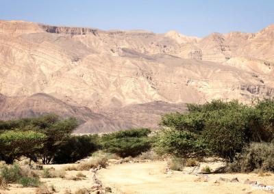 freunde-israels-wueste-e-0355