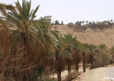 freunde-israels-wueste-e-7436